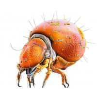 018-0300 SAĞLIK PAKETİ 2 ÜRÜN FİYATIDIR - Gıda Destek, Bağışıklık Güçlendirir ve Hediyesi Dış Parazit ve Mite Yok Eder