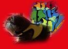 Ginepig, guinea pigs, tasmalari