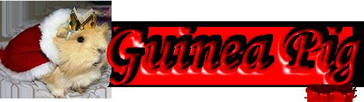 Ginepig - Guinea Pig  - Bilgi, Tecrübe ile Kazanılır